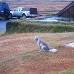 Friendly silver fox