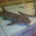 . . . but this baby shark I cannot afford to eat.