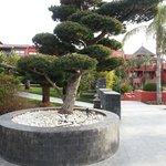 jardines bonsai de mas de 200 años