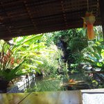 Tilted view of koi pond/waterfall from hammock in sala