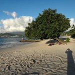 """Our"" tree at Grand Anse Beach"