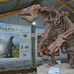 Esqueleto de megaterio