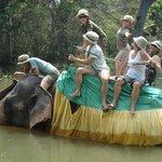 Paseo en Elefante en Haravanna