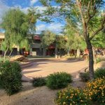 Desert landscaping around hotel