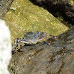 Crabby friend
