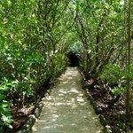 Nature park walk