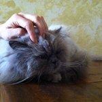 gato-samuel♥