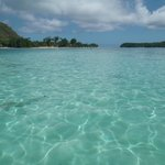 Moorea Deep Blue - Lagon (raies et petits requins)