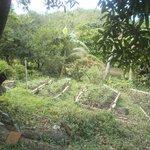 Herb Garden for the Restaurant