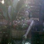 Photo of Barreado