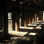 The Shearing shed!