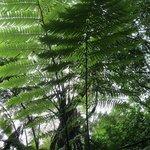 The beautiful fern tree