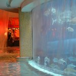 Golden nugget pool/aquarium