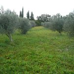 olives around b/b