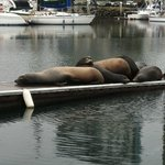 Sea Lions on the docks