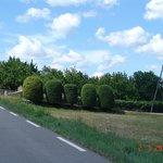 Road to Château La Canorgue