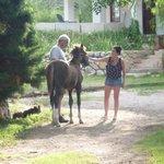 Bernardo y su caballos