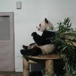 Great visit to the Pandas