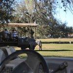 Shaded, comfortable safari vehicles