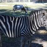 up close & personal with zebras