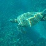glorious turtles