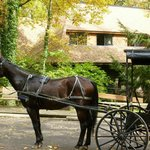 Buggy Rides through Amish Country