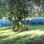 Photo of Bed & Breakfast Il Giardino delle Palme