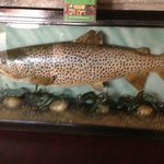 A big stuffed trout