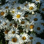 Flores por doquier
