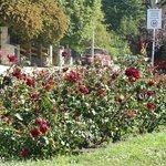 Rosas, rosas y mas rosas