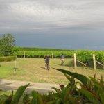 Kids biking through the vines
