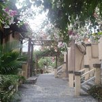 Bougainville covered pathway to rooms
