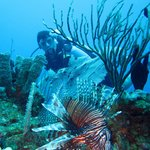 Lion fish! Not native to the Caribbean- very invasive species and venomous!