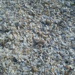 Shell covered beach