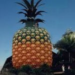 The Big Pineapple, Sunshine Coast