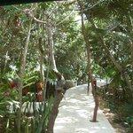 """Wild alley """"Maya Beach"""""""