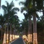"Palm avenue ""Maya caribe"""