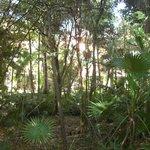 Wild garden parts