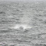 Whale Ahoy!!!!!