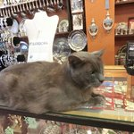 cat in a shop