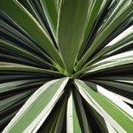 reiche Pflanzenwelt