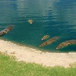 More crocs