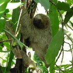 three-toed sloth we spotted on the hotel grounds by the entrance gate
