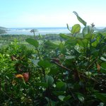 vista dai Mamiku gardens