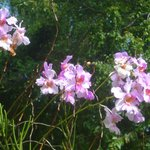 belle le orchidee