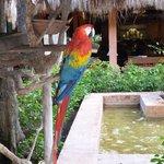 Les perroquets de l'accueil