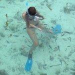 Même au bord de l'eau, affluent les poissons coraliens