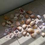 some shells I picked!