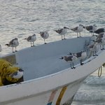 Birds waiting for the Fishermen