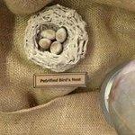 Browning Museum - petrified birds nest = V